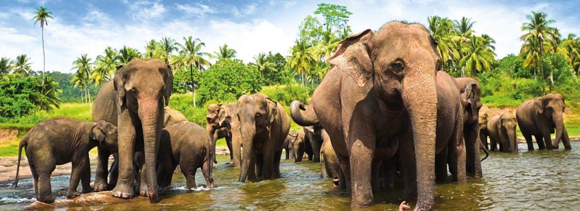 Горящие туры на Шри-Ланку из Запорожья