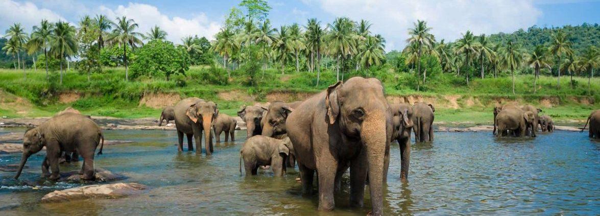 Туры на Шри-Ланку на школьные каникулы
