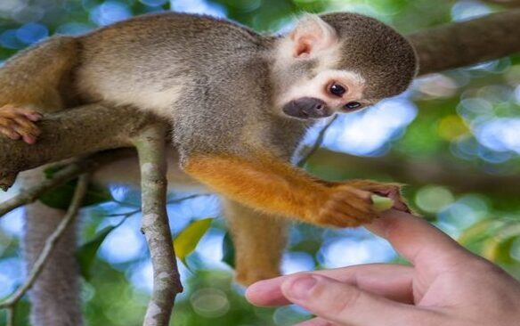 Мир обезьян